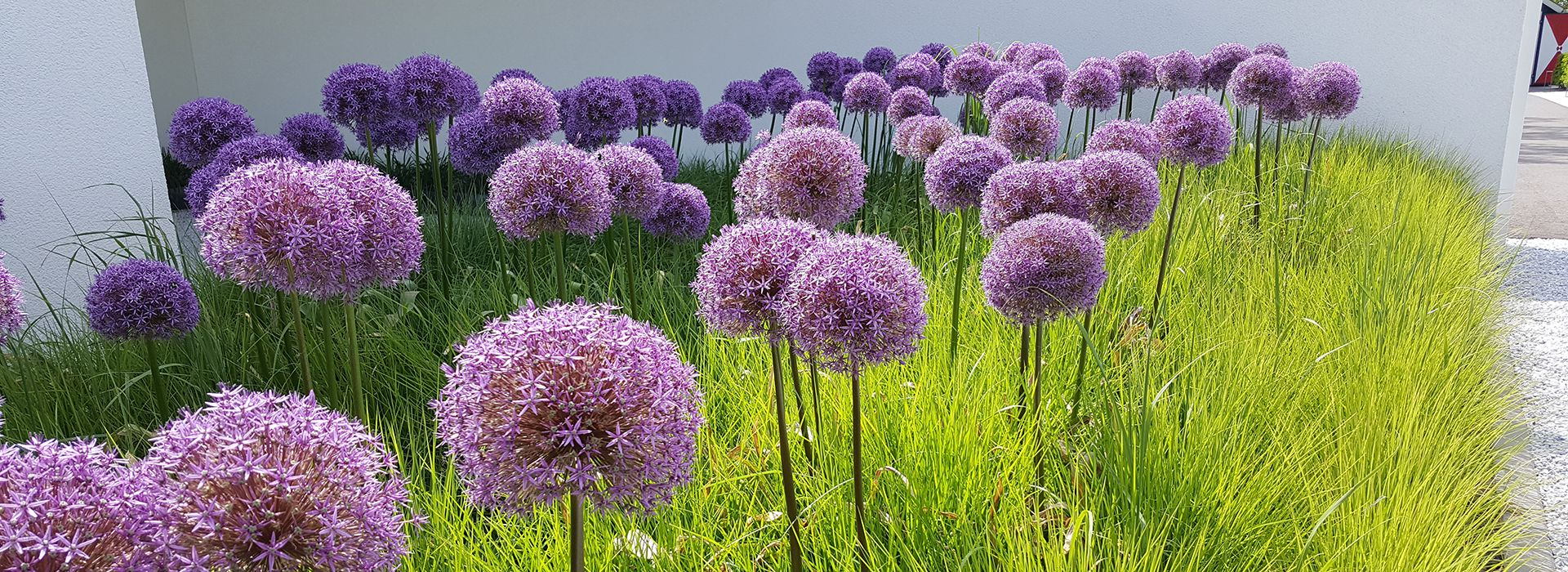 Florall Hoveniers`